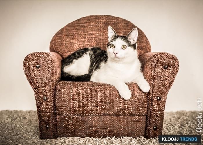 giant cat condo