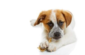 best chew sticks for dogs