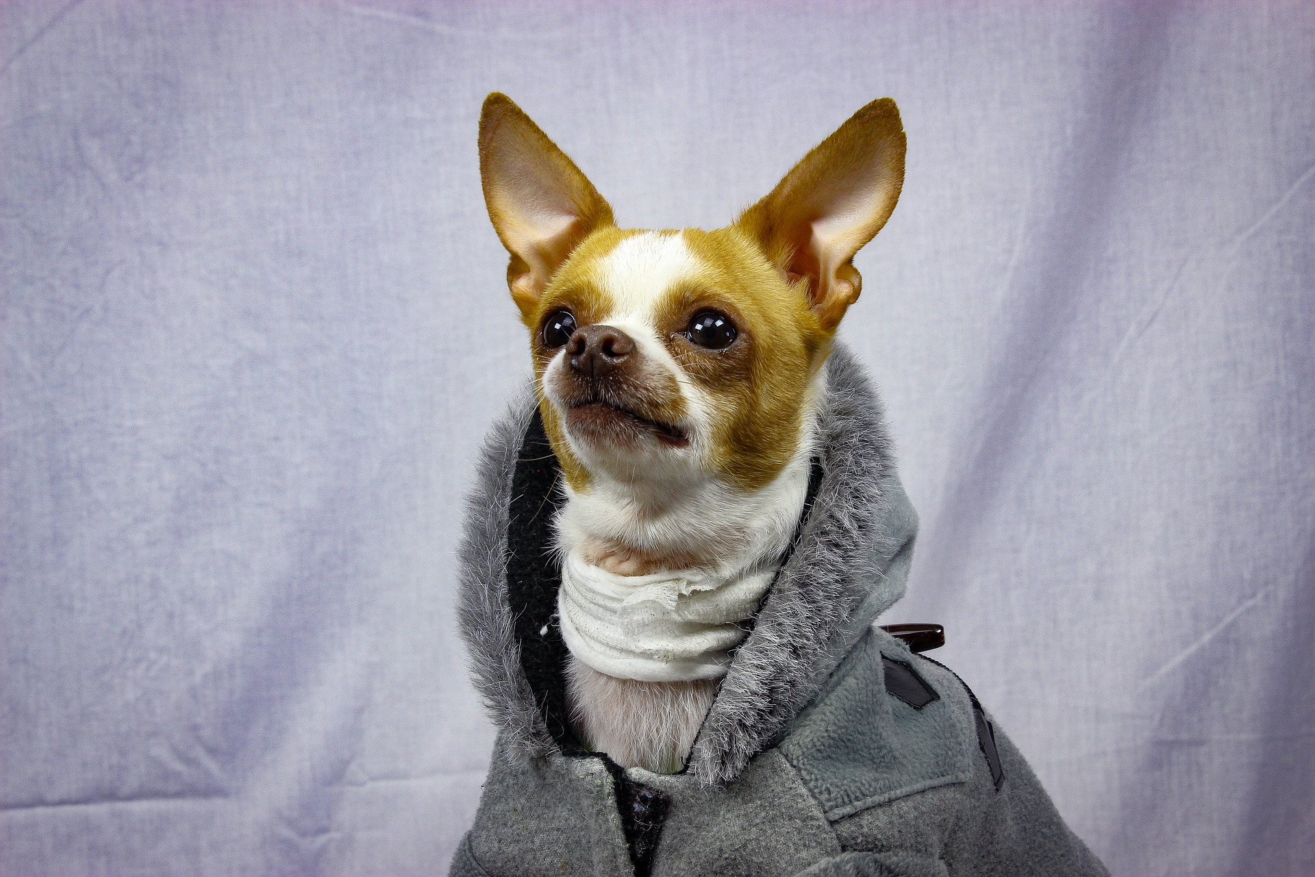 Dogs get cold in the winter