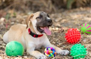 good chew toys for dogs