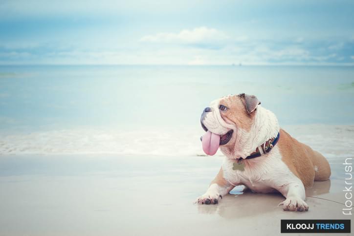 off leash dog beach