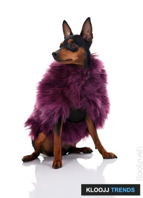jacket dog