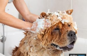 best dog shampoo for skin allergies