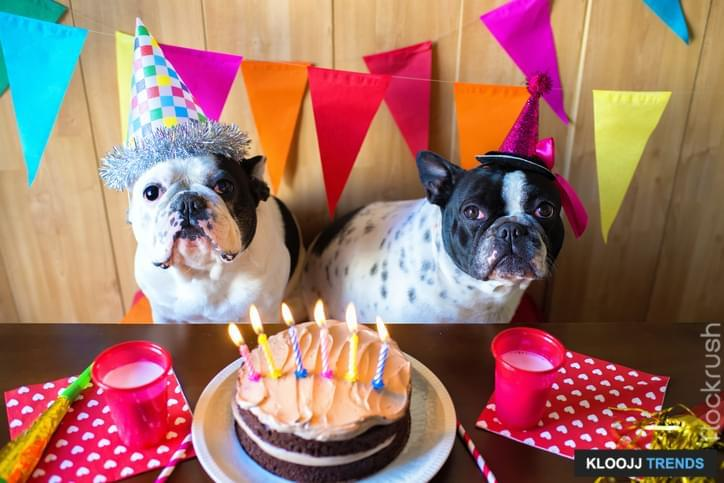 Top Reasons to Celebrate Your Dog's Birthday