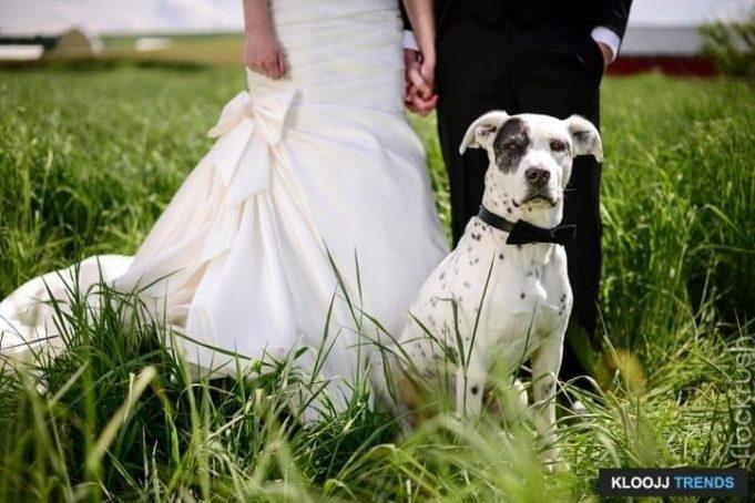 dog wedding ring