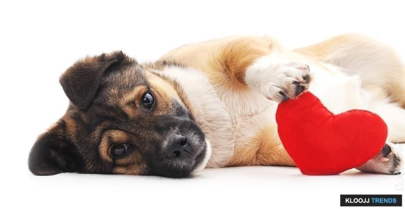 emotional needs dog