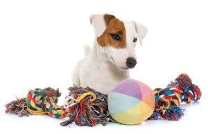 dog treat toys