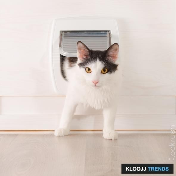 cat flap in double glazing & How to Train Your Cat on Practical Things?