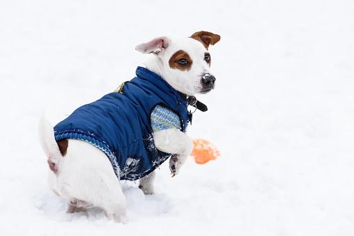 top dog apparel