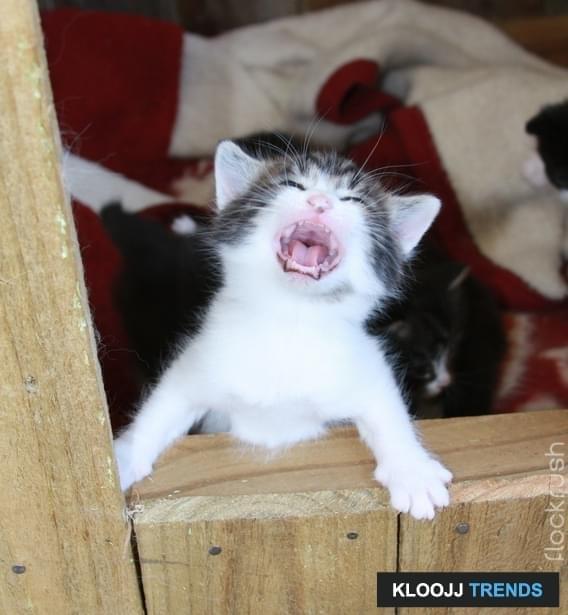 becoming a cat behaviorist