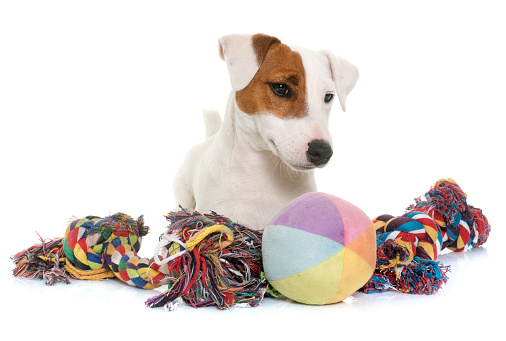 toy dog toys