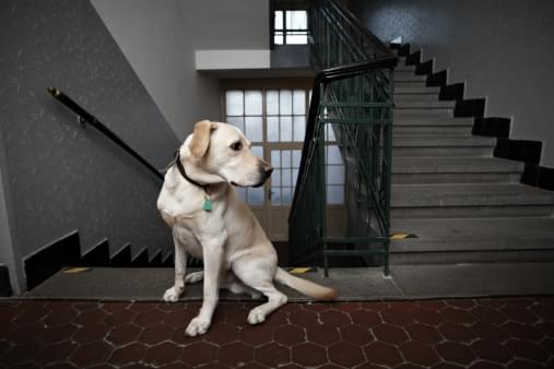 best dogs for condos