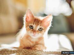 do cats keep mice away