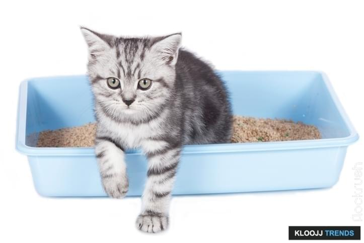 how often should i change my cats litter