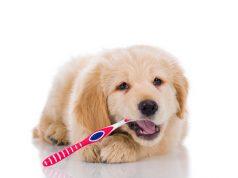 easiest way to clean dogs teeth