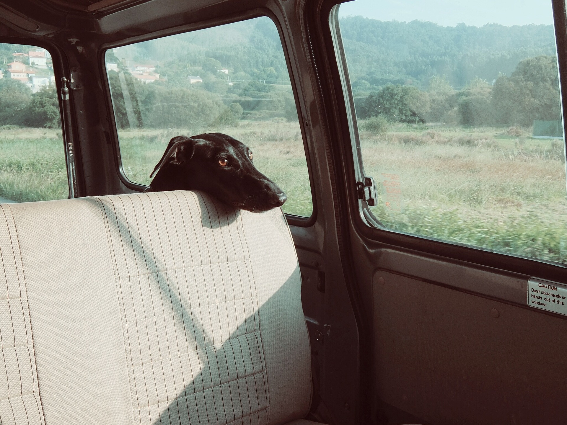 Ways to cure car sickness in dogs