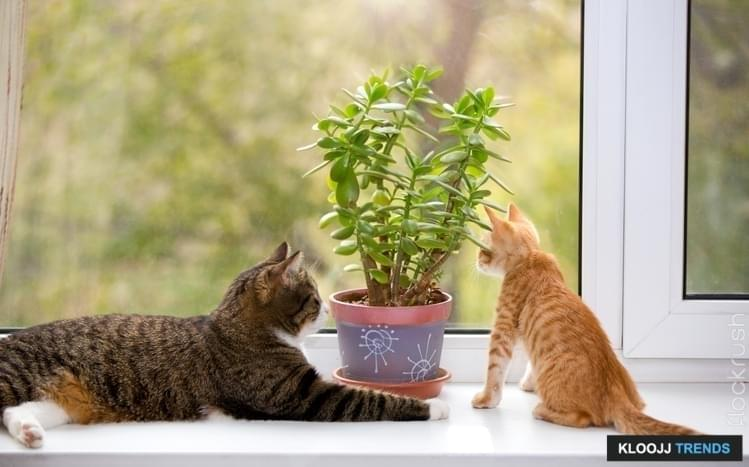 plants poisonous to cats. Black Bedroom Furniture Sets. Home Design Ideas