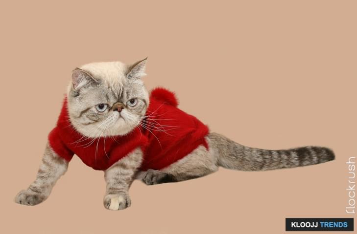 diy cat carrier