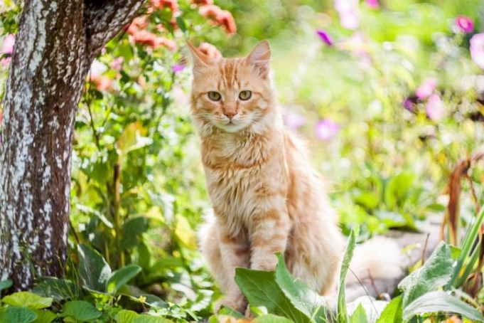 cat proof planter