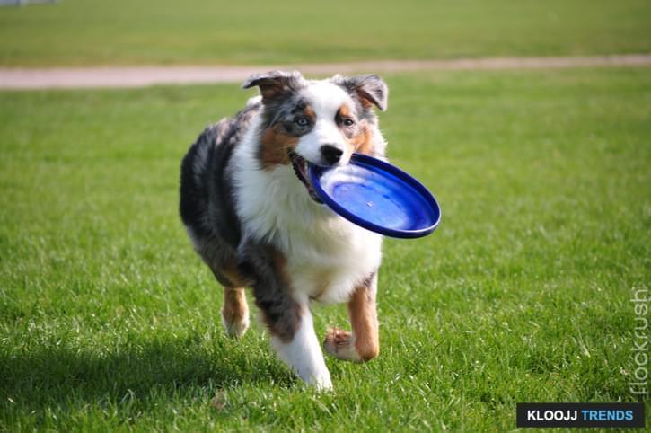 puppy frisbee