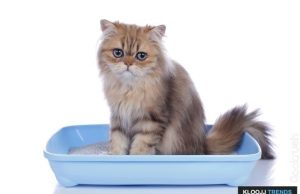 how often do cats use the litter box