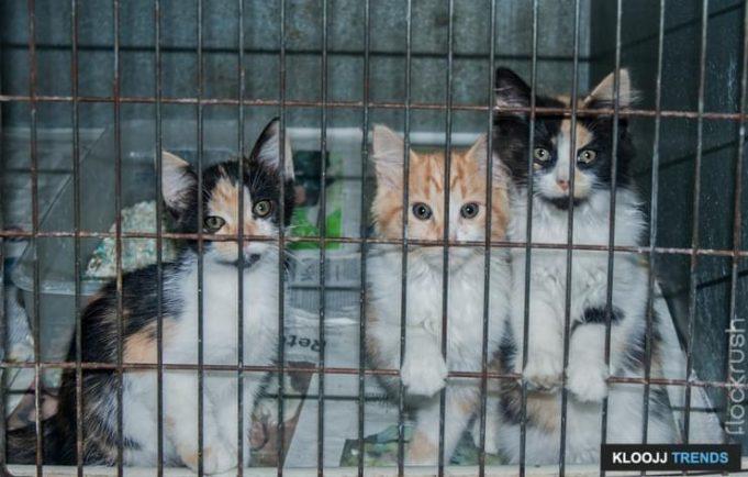 feral cat rescue