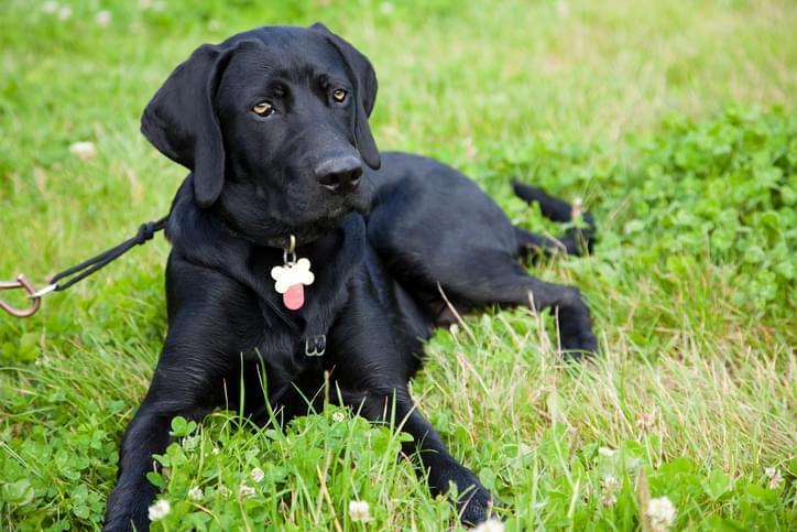 a dog tag