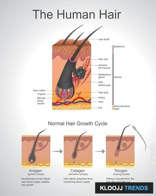 average cost of hair restoration