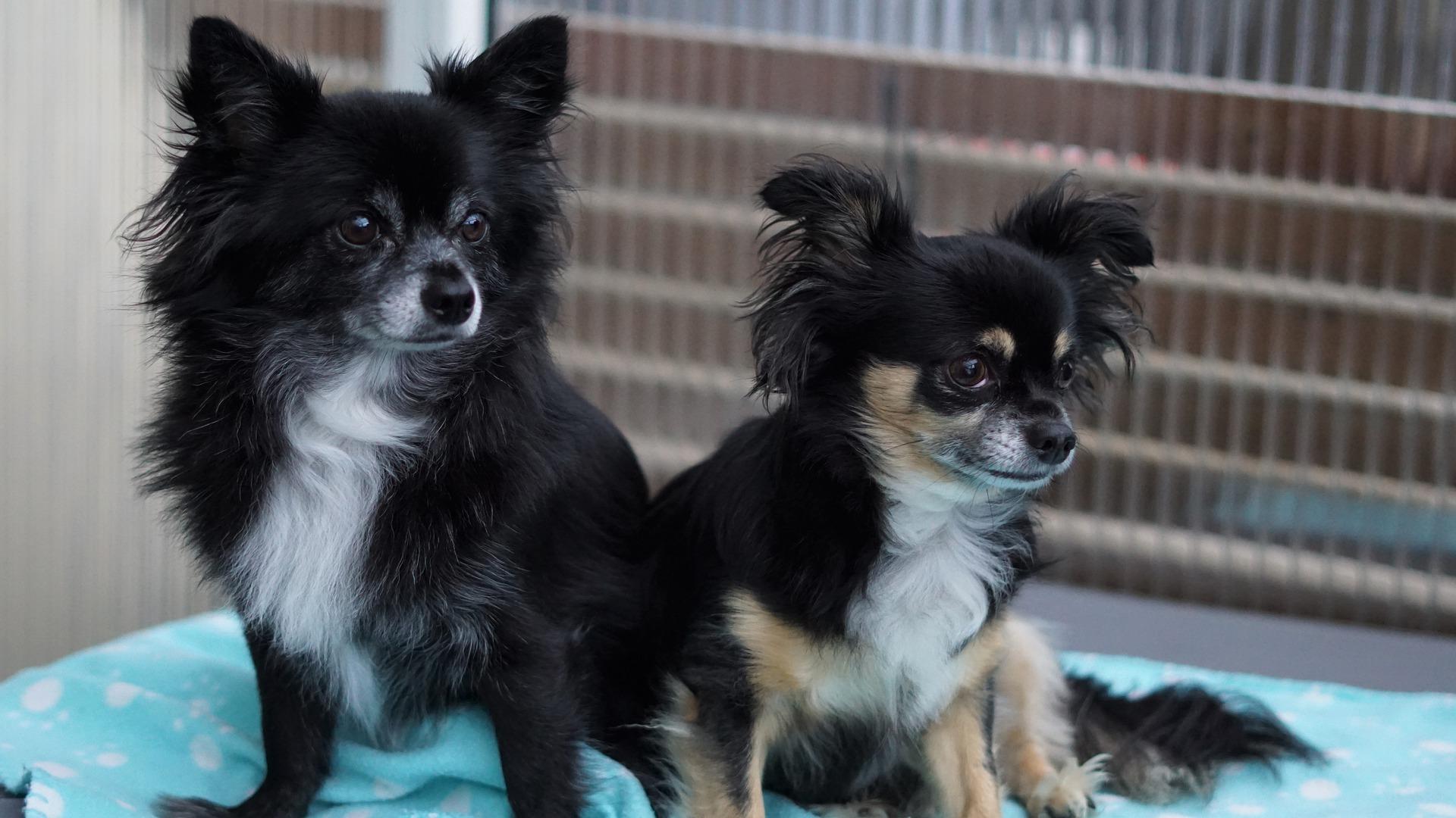 maricopa small dog rescue center