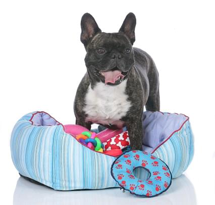 best toys for active dogs