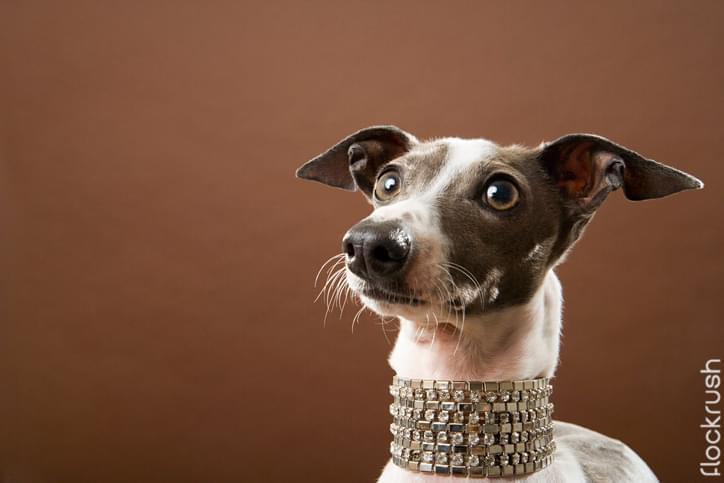 dog collar jewelry