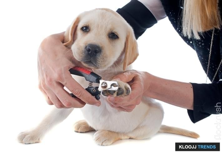how to cut dog's nails without clippers