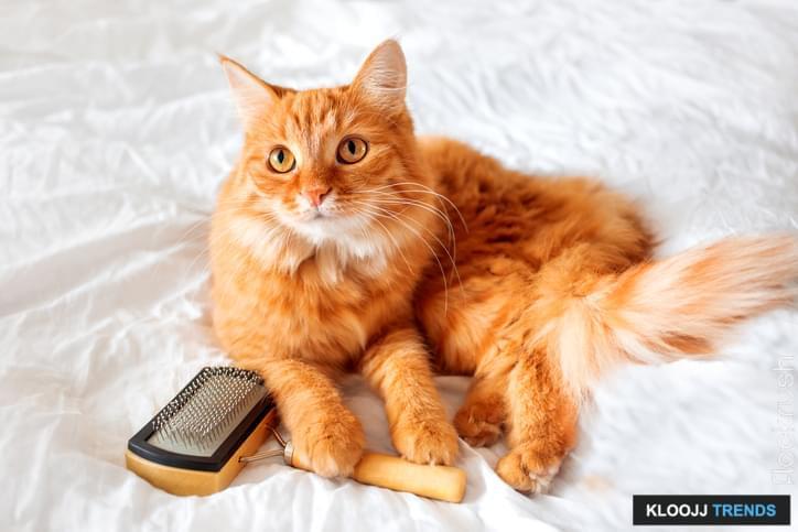 first cat