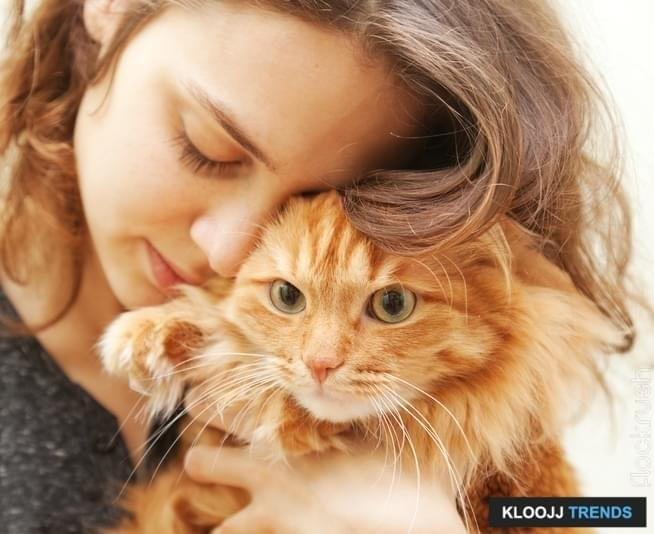 cosmic cat veterinary clinic