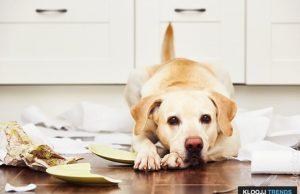 understanding dog behavior