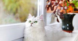 outdoor cat fleas