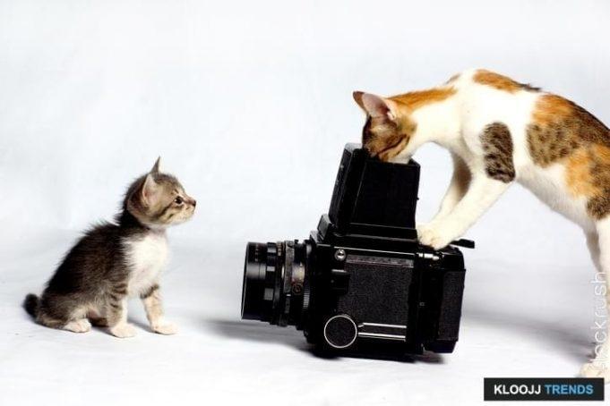 kitten feeder