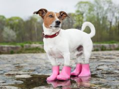 dog raincoat with umbrella hood