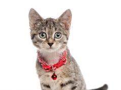 cat shock collar