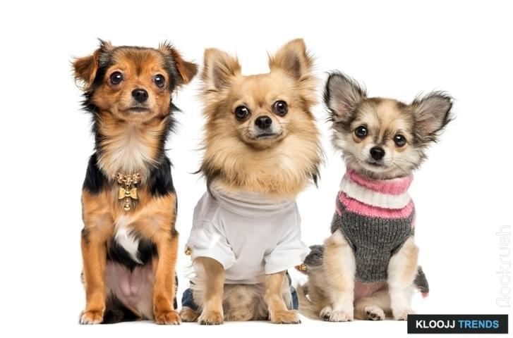 fancy dog coats