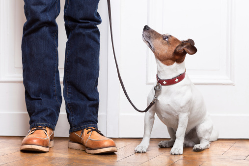 dog training at home