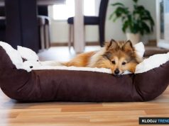 pet beds for small dogs