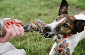top rated puppy toys