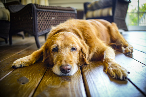 dog old age symptoms