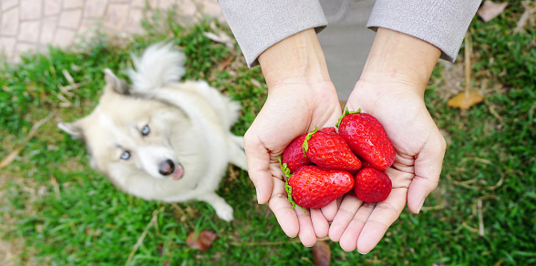 fruits for puppies