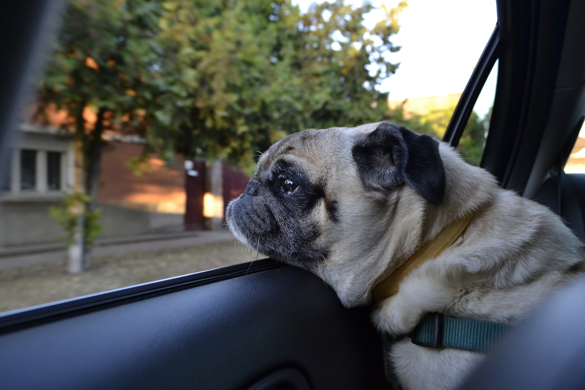 canine car sickness