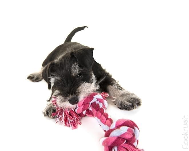 dog rope toys safe