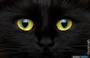 cat eye colors