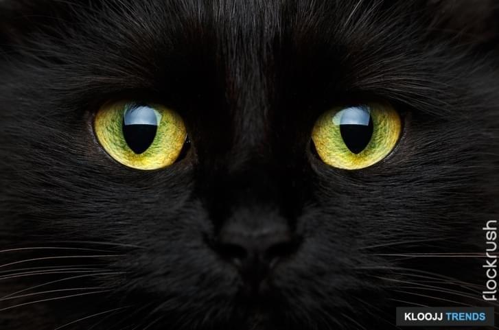 Lucky Cat Rescue Facebook