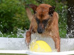 food for dogs in summer
